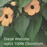 Stromversorger: Naturstrom, Provider: UD Media GmbH